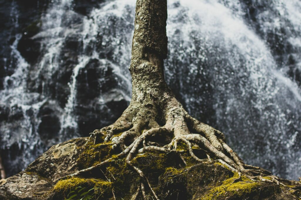 tree-roots-on-rock-formation