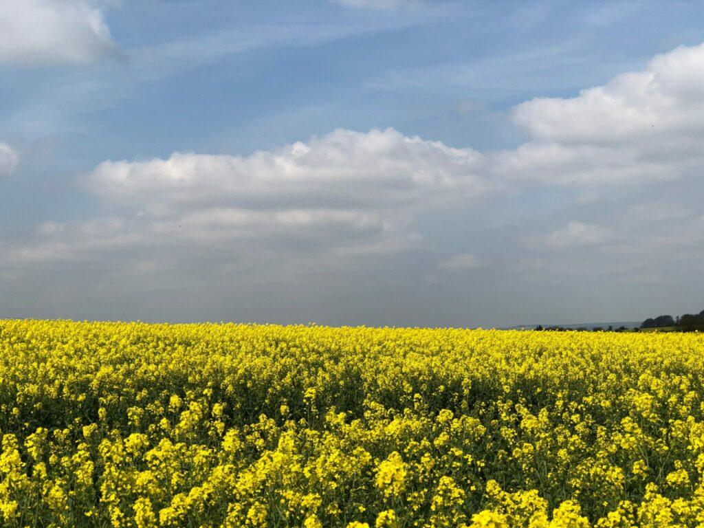 flower-field-under-white-clouds