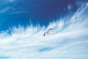 bird-flying-in-the-sky