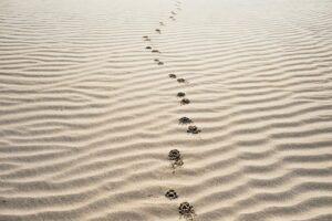 footprints-on-sand