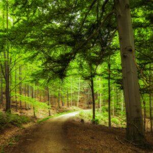 green-leaf-trees