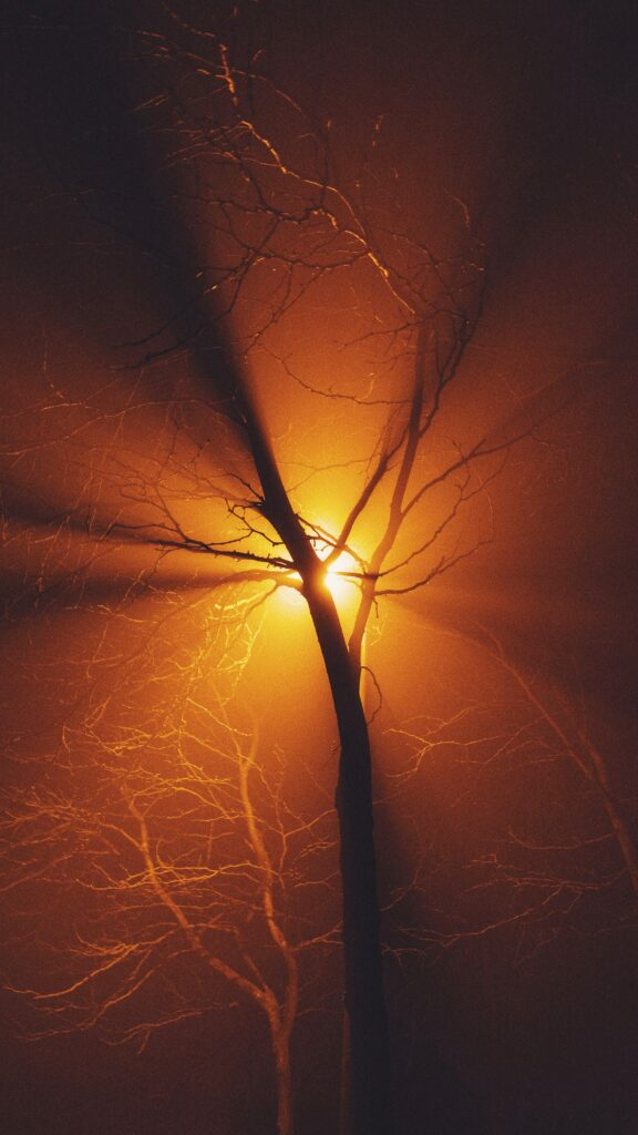 leafless-tree-during-golden-hour