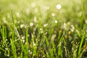 dew-drops-on-green-grass